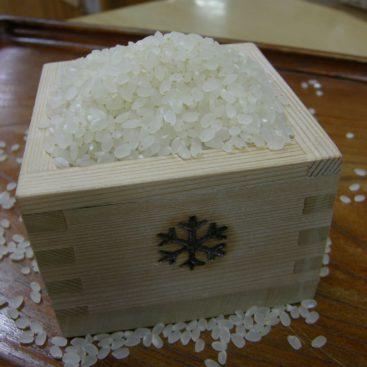 雪中貯蔵 棚田のお米